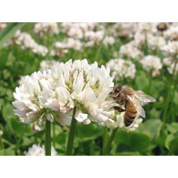 国産 野の花はちみつ 百花蜜 (190g×2本)