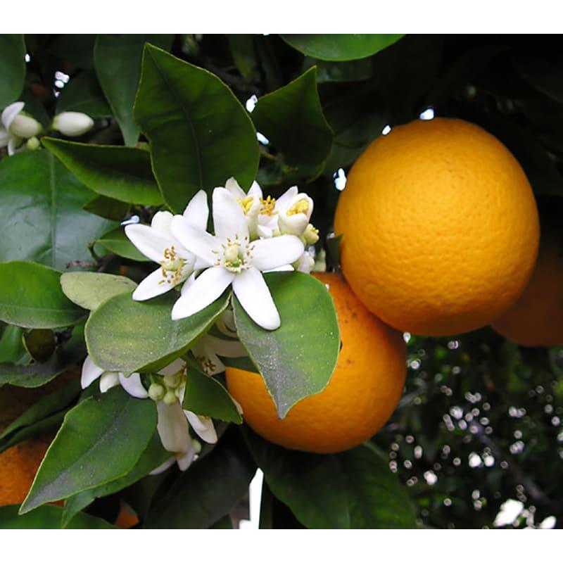 メキシコ産 オレンジはちみつ 1kg