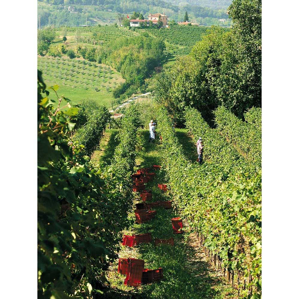 ソムリエ厳選!イタリア・スパークリングワイン4種セット 「ベッレンダ」社ぶどう畑
