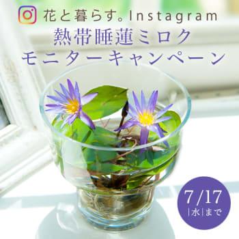 花と暮らす。Instagramフォロー&いいねキャンペーン