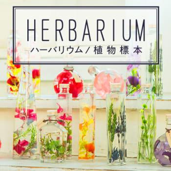 ハーバリウム/植物標本