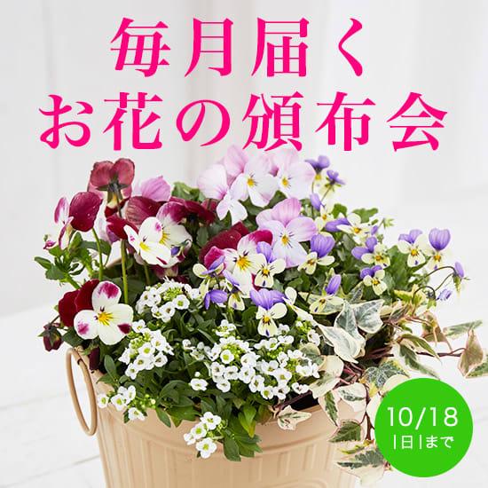 【頒布会特集】毎月おうちに届く!花・緑のお取り寄せ