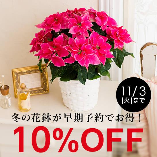 冬の花鉢が期間限定10%OFF
