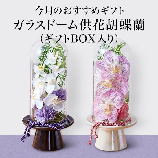 ガラスドームの供花胡蝶蘭 今月のおすすめギフト