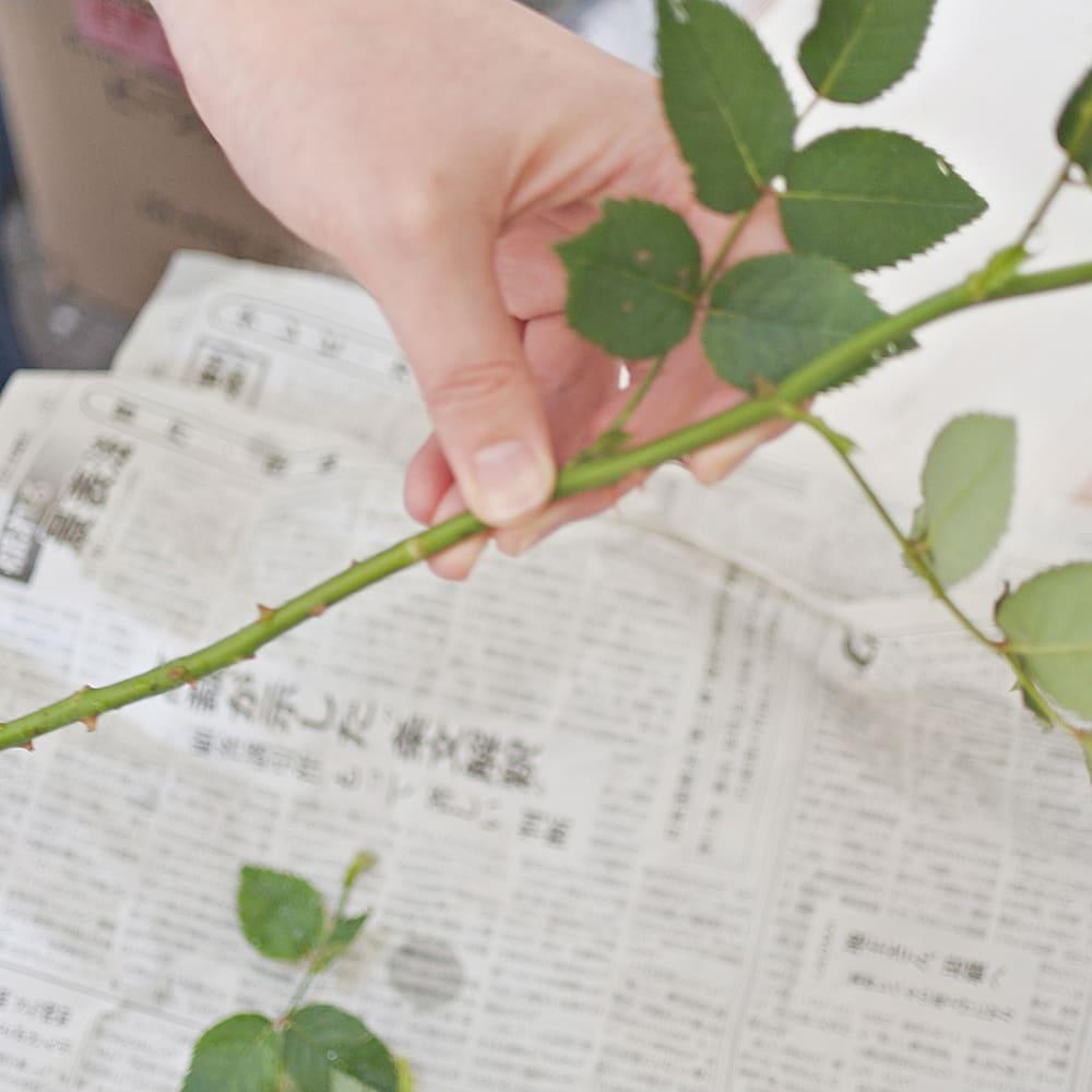水につかる部分は葉を取り除く