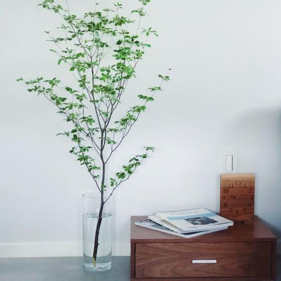 ドウダンツツジなど人気の「枝もの」グリーンで手軽に始めるおしゃれな暮らし
