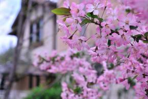 フォーシーズンズ・ガーデン(春編)