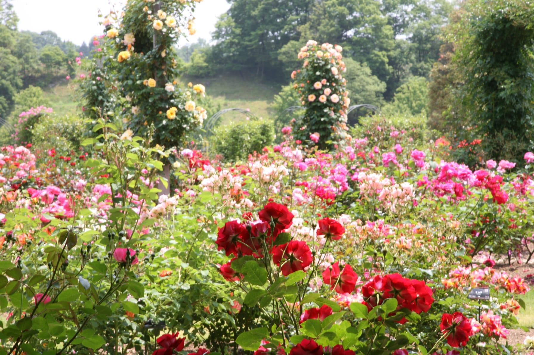 春花壇の整理と夏花壇づくり