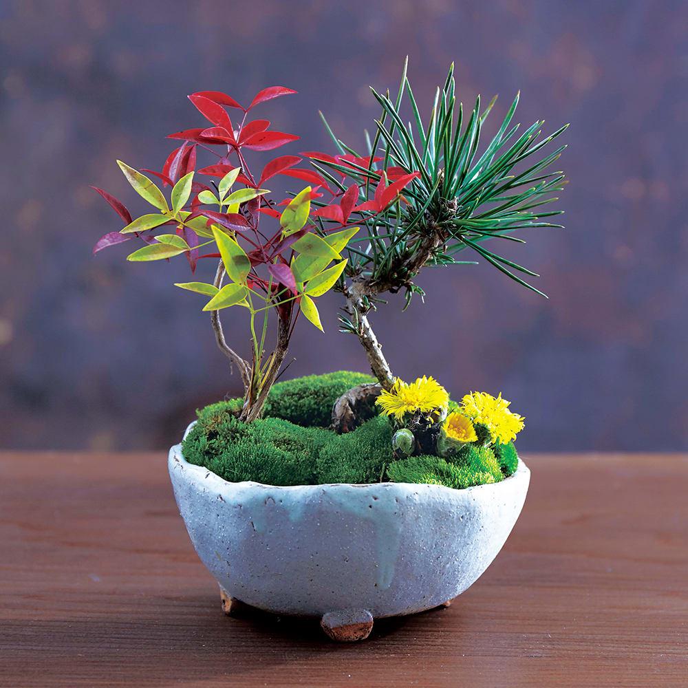 【12月 迎春寄せ植え 国産鉢】