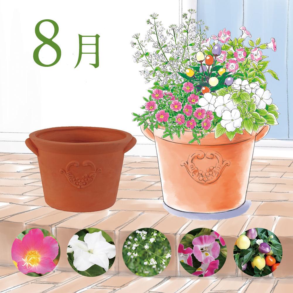 【8月】ピンク×ホワイトのお花に、カラフルなトウガラシをポイントに。