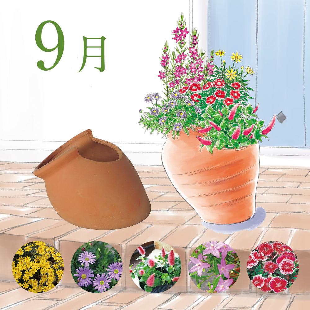 【9月】秋らしいお花に、★型のお花、サザンクロスをちりばめて