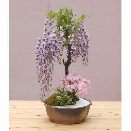 【3月お届け】藤と桜の寄せ植え盆栽<br>9,350円(税込)