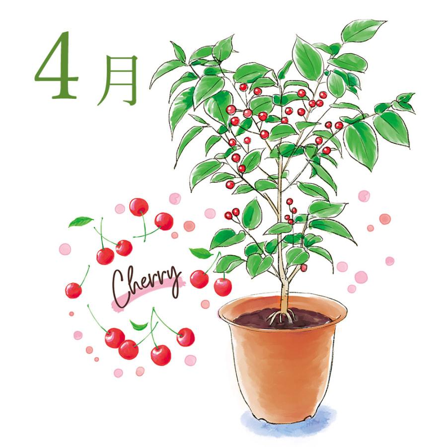 【毎月届くお花の頒布会】フルーツツリーコース(2021年4月〜2021年9月)<br> 31,680円(税込)