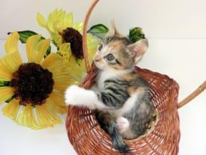 ペットのお悔やみにお花を。贈るときのマナーと適したお花とは?