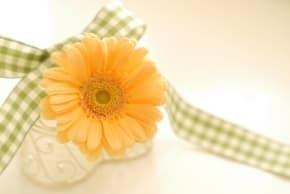 色の種類が豊富!母の日に好きな色のガーベラを贈ろう!