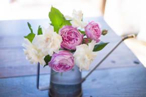 <初心者必見!>バラの育て方、お手入れ方法や注意点