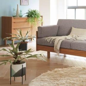 お部屋をおしゃれでセンスよく見せる「観葉植物」の選び方・飾り方