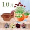 【毎月届くお花の頒布会】らくらく華やかガーデンコース(2020年10月~2021年3月)