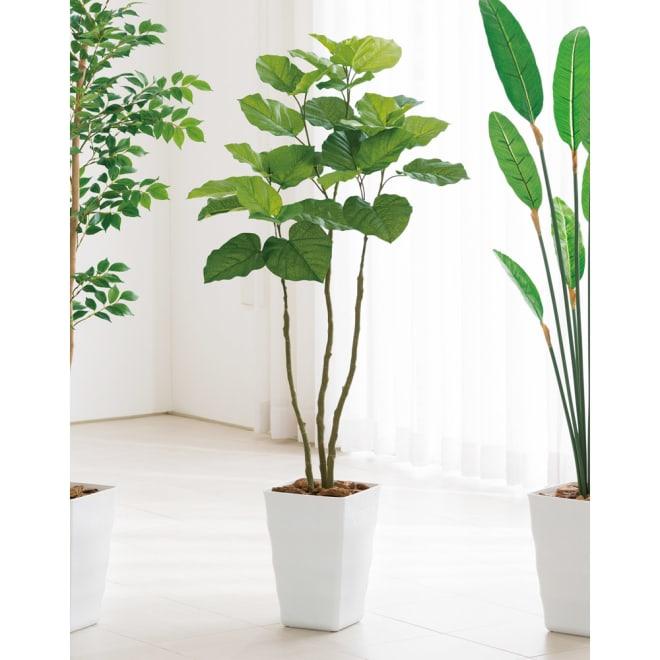 CT触媒インテリアグリーン ウンベラータ 高さ138cm 葉がハートの形をしたウンベラータは、インテリアとして人気の高いグリーンのひとつです。