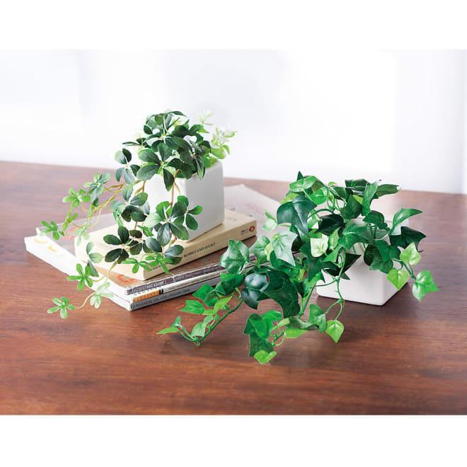 CT触媒インテリアグリーン2点セット お手入れ不要!CT触媒加工のグリーンでお部屋をリフレッシュ。