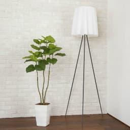 CT触媒インテリアグリーン ウンベラータ 高さ138cm 植え付け面の装飾用バーク(天然木の皮)付きです。