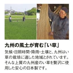 九州産の良質い草 折りたためるい草の敷きマット 安心の国産い草を使用しています。