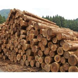 国産杉 薄型頑丈タワーシェルフ 幅120高さ89.5cm 国内生産にこだわった一貫ライン。