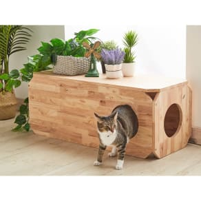 キャトハス ペットベンチ L (ペットと一緒に使える天然木ベンチ) 写真