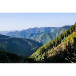 エッグタイルのバスマット 通常 紀州半島南部の山々の山林家との連携によって厳しい品質のチェックを経た木材だけを使用。