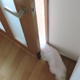 ペット用ドア開閉アイテム「わんにゃんフリーパス」 スイッチが押されてドアが開きます。軽い力でワンちゃんも自分で自由自在にドアを開けて出入りできます。もちろん開いたあとのドアは自動で閉まります。