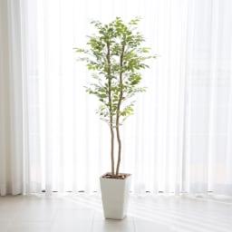 """CT触媒インテリアグリーン マウンテンアッシュ 高さ150cm 幹に本物の木を使用したマウンテンアッシュは、職人の手で葉ぶりを調節し、より""""自然""""な仕上がりに。本物のグリーンと見まがうようです。"""