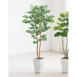 CT触媒インテリアグリーン マウンテンアッシュ 高さ150cm お部屋のテイストを選ばず飾れるマウンテンアッシュは、いつも爽やかな印象を与えます。