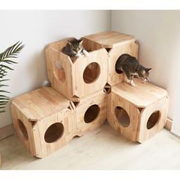キャトハス ペットベンチ S (ペットと一緒に使える天然木ベンチ) コーディネート例 積み重ねて遊び場にも。 ※写真はSサイズを6個使用しています。