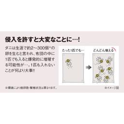 ダニゼロックお得な完璧セット(布団+カバー) 敷布団用