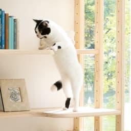 国産天然杉の ネコも遊べる オープンラック 据え置きタイプ 幅77cm 高さ179cm 可動棚は、猫が昇り降りして遊べるゆとりあるステップに。ステップ左右位置は組み立て時に選べます。