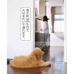 アクリル製ペットゲート 高さ50.5cm 1枚 出入りを制限したいキッチンにも簡単に運んで設置できます。
