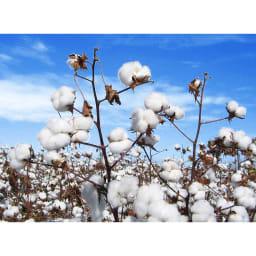 【三井毛織】エジプト超長綿やわらか綿毛布 敷き毛布 エジプト超長綿 超長綿は綿花全体の3%以下しか取れない貴重な素材。エジプト超長綿は品質の良さから高級品とされています。