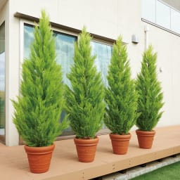 人工観葉植物ゴールドクレスト 高さ190cm 複数本並べて置けば生け垣風の目隠しにも。