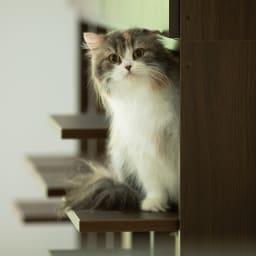 登って遊べるネコ用ステップ付き たっぷり収納本棚  幅116.5cm高さ180cm ステップ棚板は本体より20cm前へ出ます。