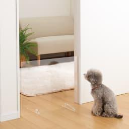 アクリル製 透明ペットゲート 幅90・2枚 もちろん1枚使いもOK。お部屋の入り口に。 ※写真は幅60cmタイプです。