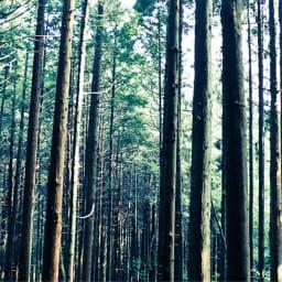 国産ひのき天然木すのこシングルベッド 棚あり(フレームのみ) 島根・四万十産ひのき天然木の風合いと香りが生きています。