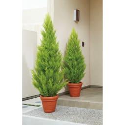 人工観葉植物ゴールドクレスト 高さ190cm ※お届けは手前側高さ190cmの商品になります。