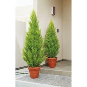 人工観葉植物ゴールドクレスト 高さ160cm お得な2本組 写真