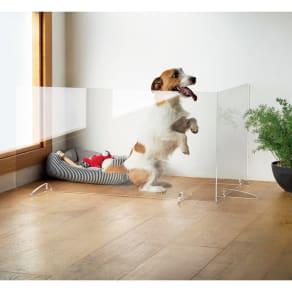 アクリル製 透明ペットゲート 幅90・幅60 写真