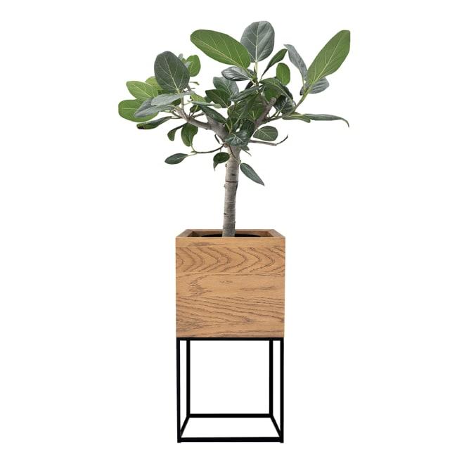 天然木プランタースタンド 高さ50cm (ア)オーク