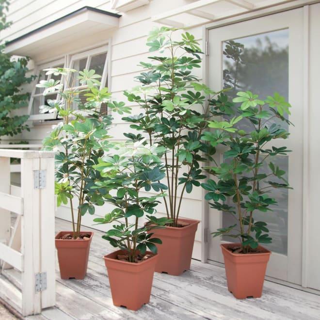 人工観葉植物シェフレラ 高さ180cm 左から150cm、90cm、180cm、120cm