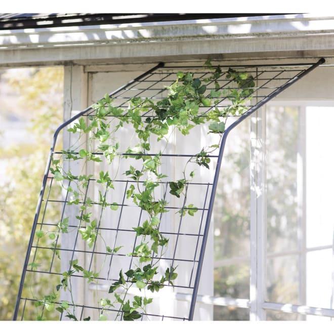 アイアングリーンカーテン〈奥行広々ハイタイプ〉 お得な2枚セット 上部までたっぷり植物が絡みます。