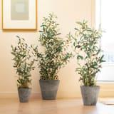 人工観葉植物オリーブ 高さ90cm 鉢カバーあり
