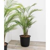 人工観葉植物アレカパーム 高さ130cm 写真