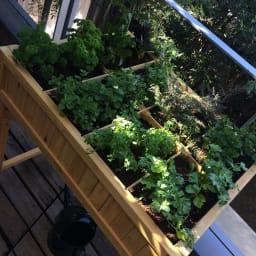 ハーブ用菜園プランター ベジトラグ 大型(8コマ)